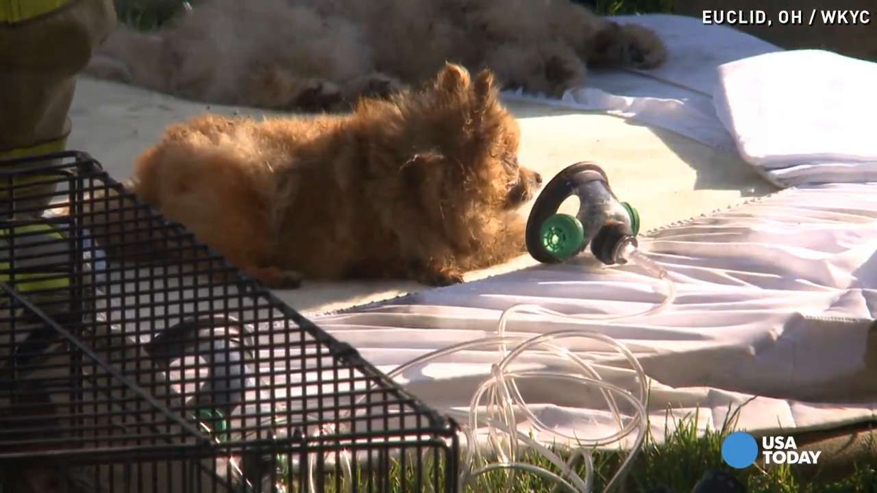 17 pets rescued from house fire thanks to this teen