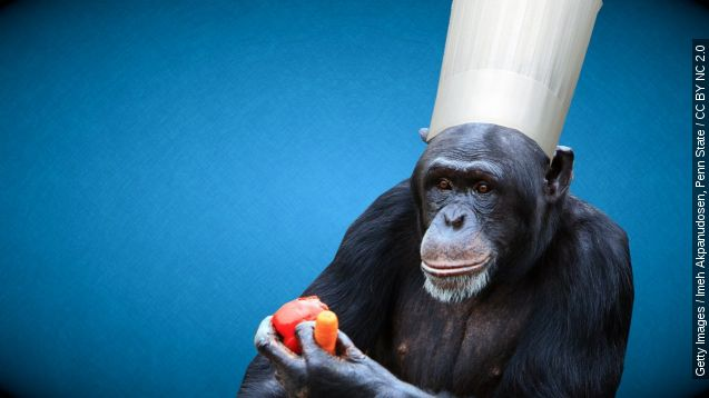 Chimps are capable of cooking, researchers say