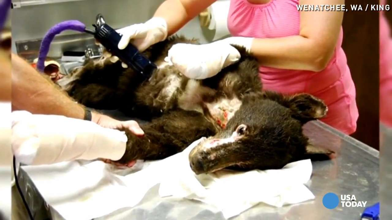 Badly burned bear returns to the wild