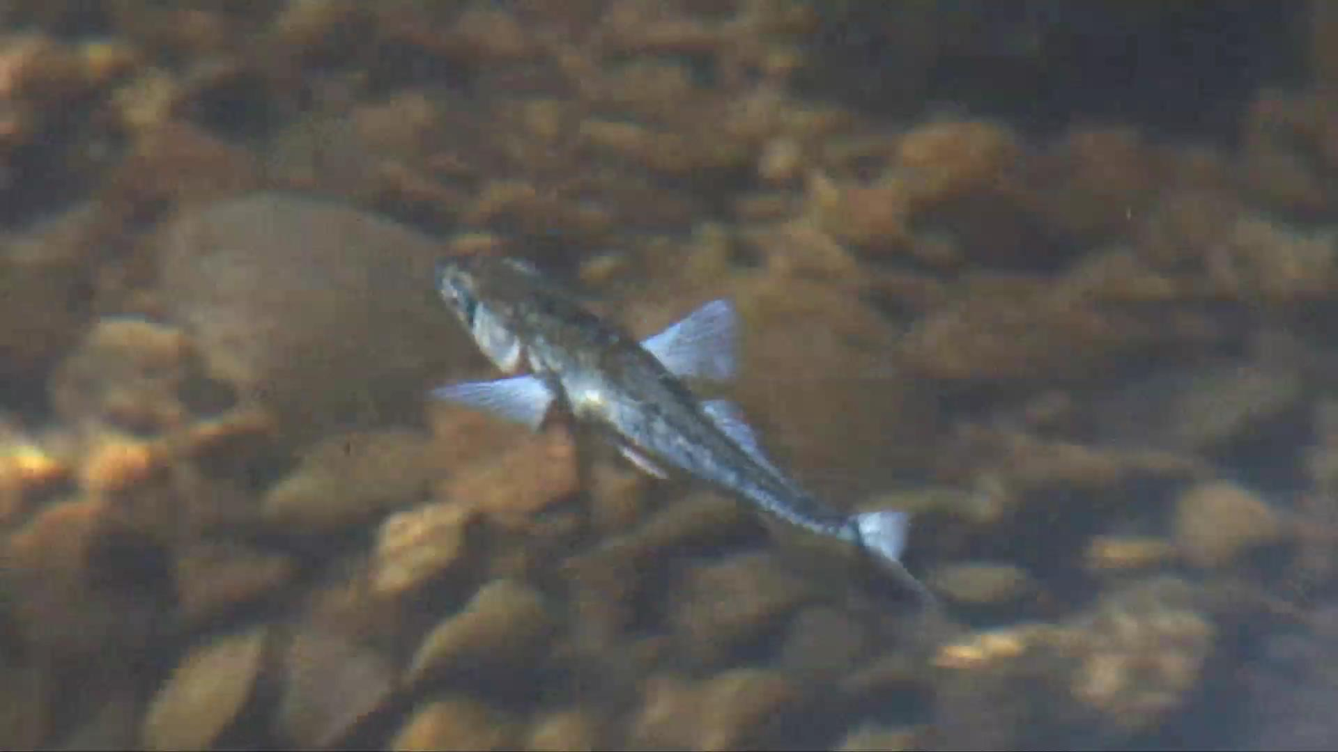 New Jersey to residents: don't eat fish from sewers