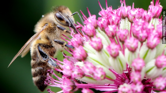 Dementia may be part of what is killing off bees