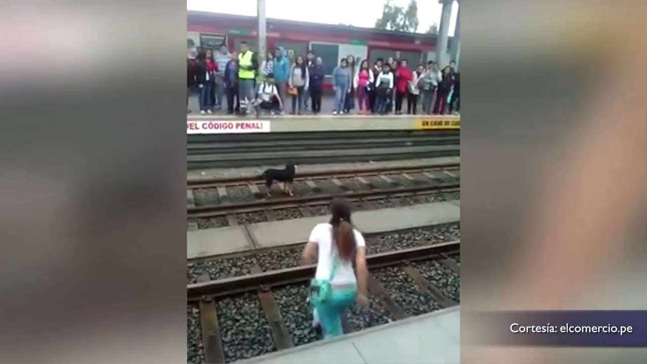 Good Samaritan may be sued for rescuing dog from train tracks