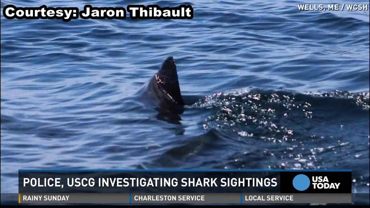 Possible great white shark sightings off Maine's coast