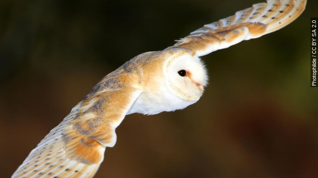 The future of Wind farms could hinge on owl wings