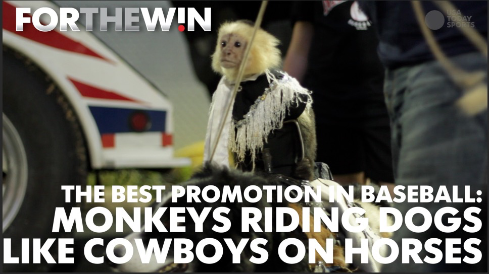The best promotion in baseball: Monkeys riding dogs like horses