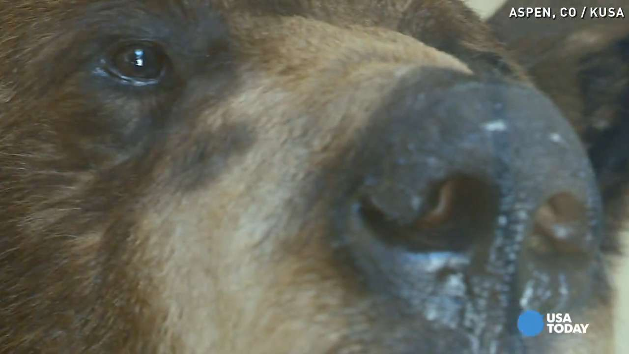 Bear bites man through tent, baby was sleeping inside