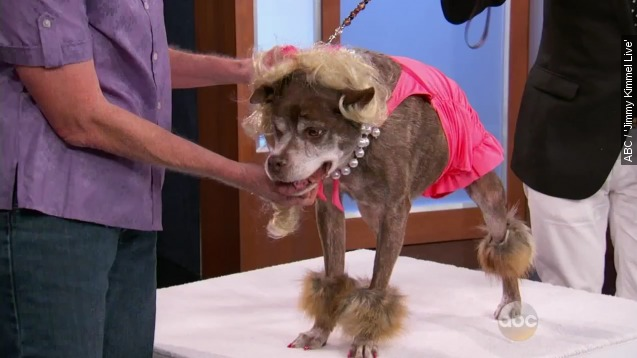 World's ugliest dog gets a glamorous makeover on 'Kimmel'