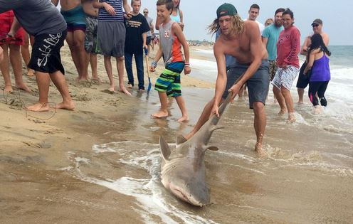 Shark pulled out of water on North Carolina beach