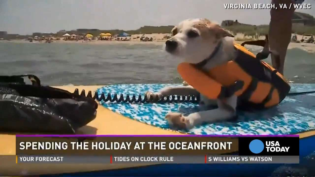 3-legged dog loves to celebrate July 4th on the beach