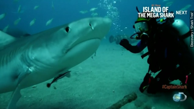 Aggressive bull sharks surround diver on 'Shark Trek'
