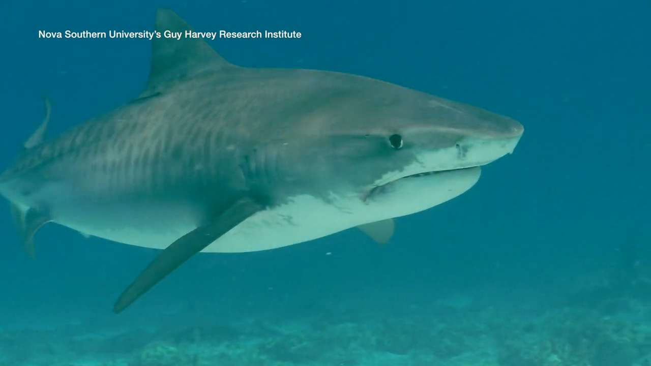 Are you guilty of believing these 5 shark myths?
