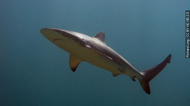 Shark week risks boosting unfounded fears
