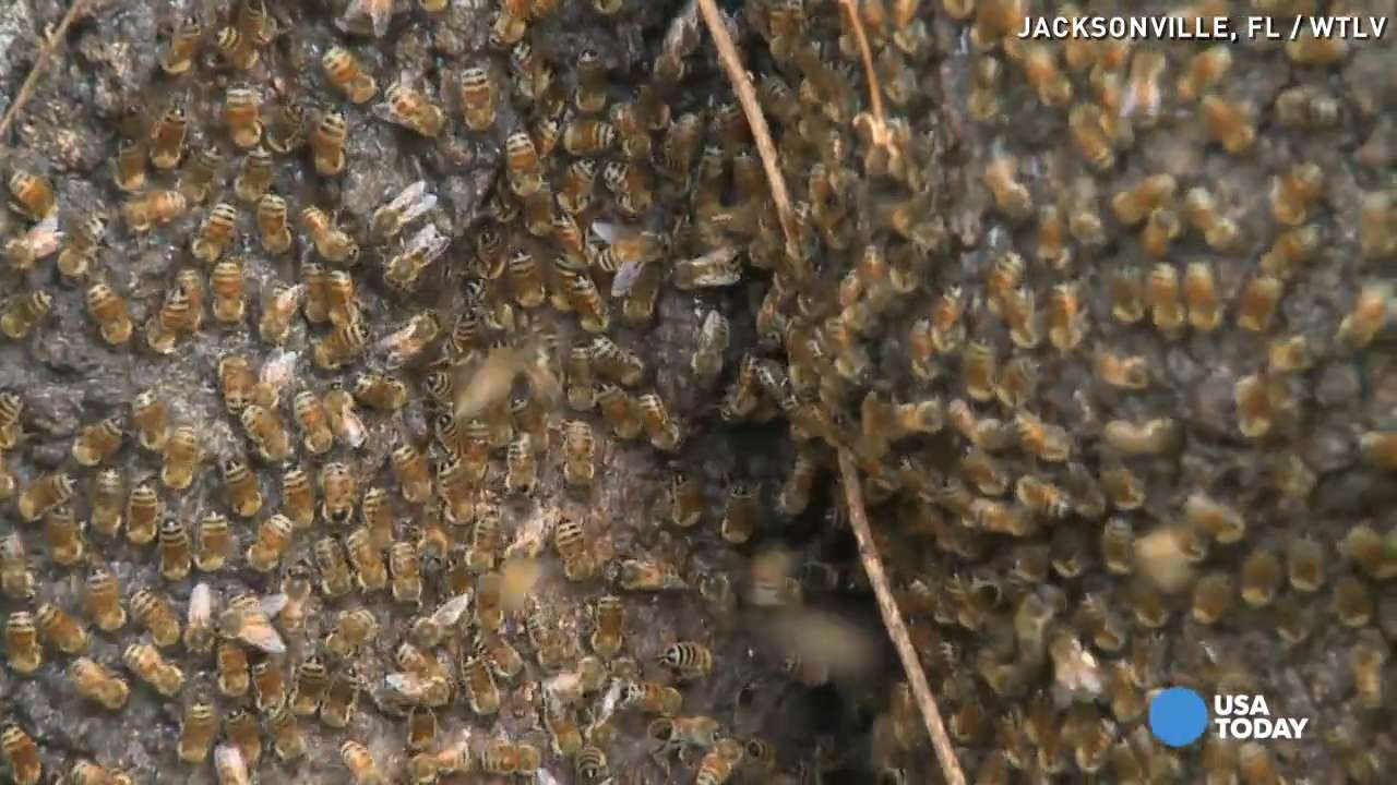 'Killer bees' take over, terrorize neighborhood