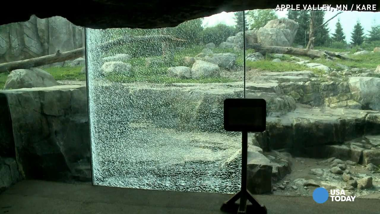 Grizzly bear shatters glass barrier at Minnesota Zoo