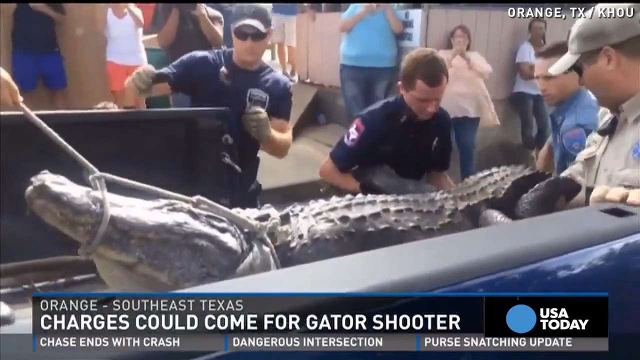 Man shoots 'killer gator,' could face charges