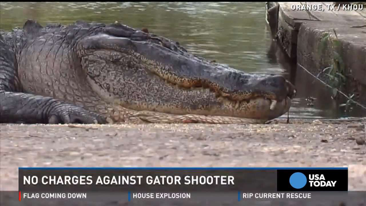 Man who shot 'killer gator' won't face charges
