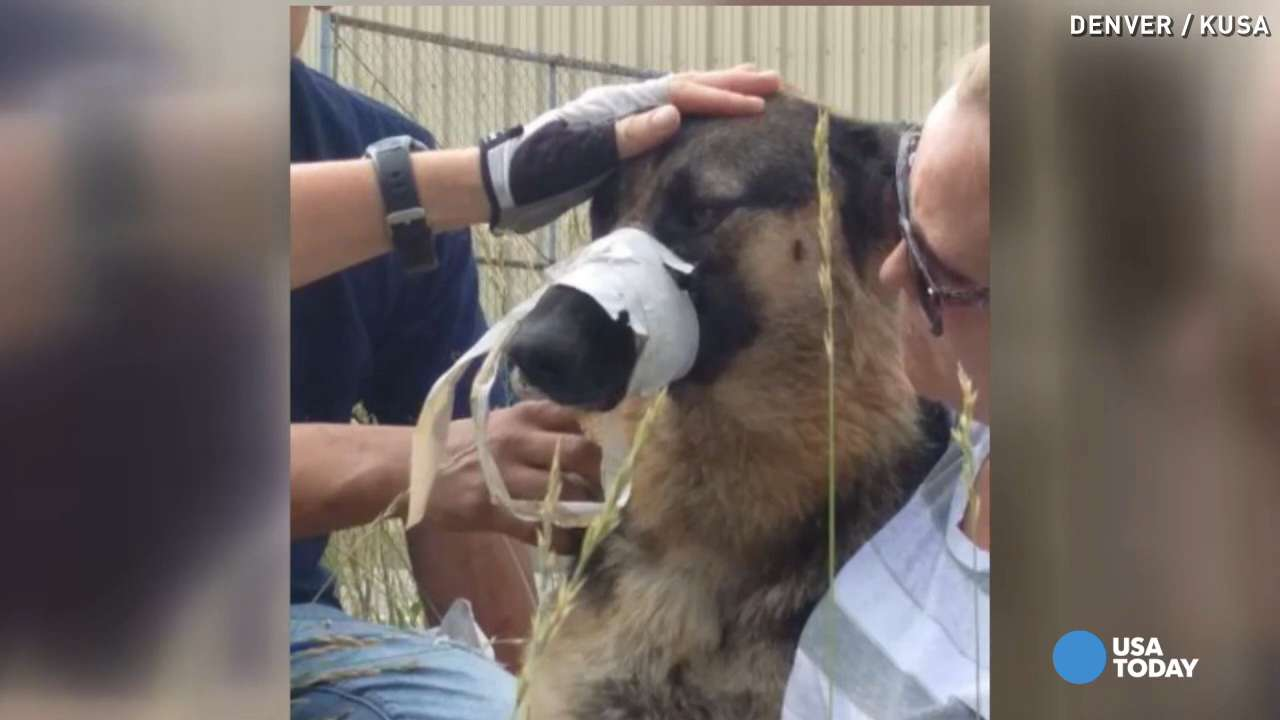 Dog with muzzle taped shut saved by good samaritan