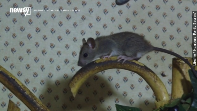 'Hoarders' rodent-infested home: 'This is The rats' House'
