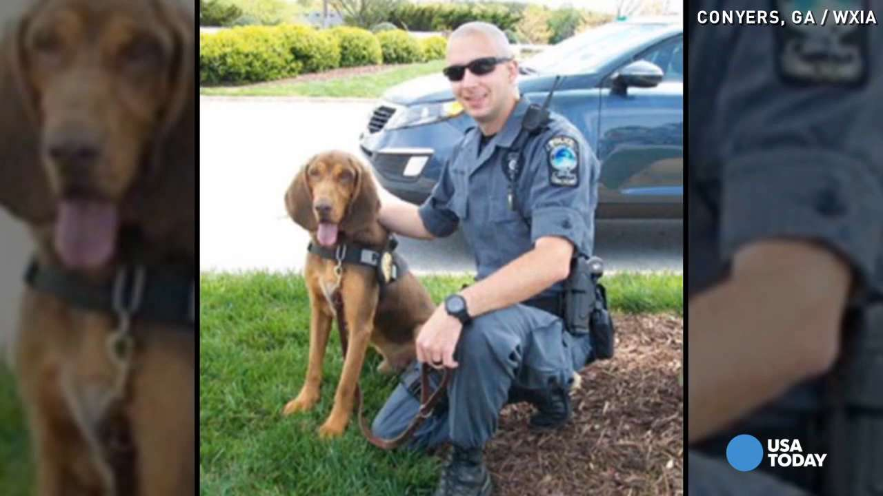 Police dog dies in officer's hot car
