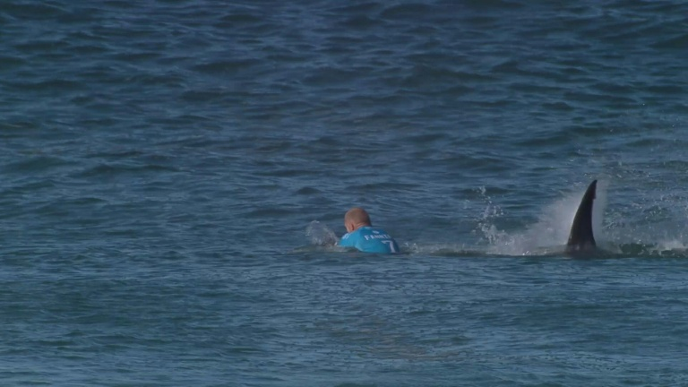 Surf pro fights off S.Africa shark attack on live TV