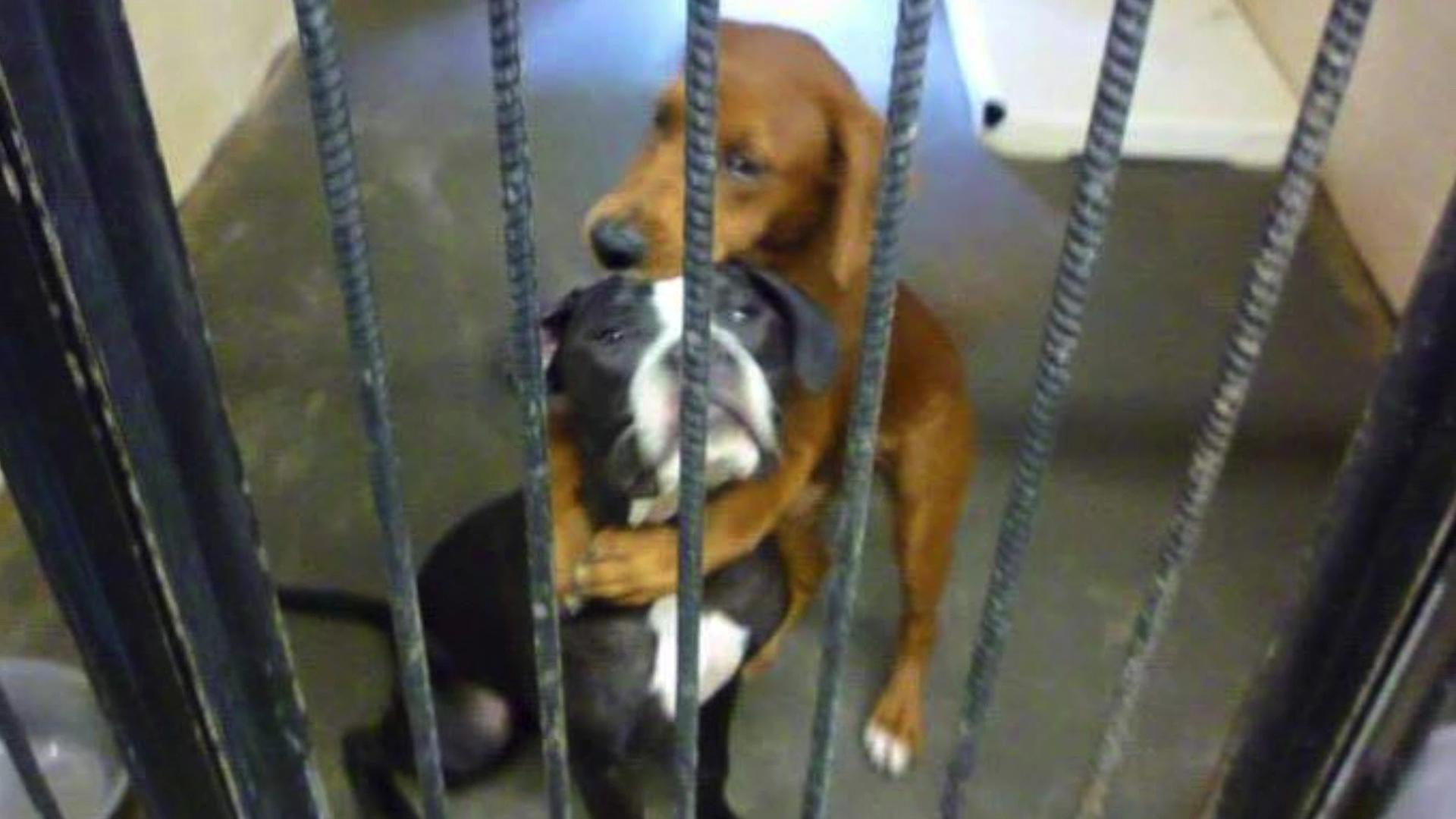 'Hugging Dog' viral photo saves pair from being put down