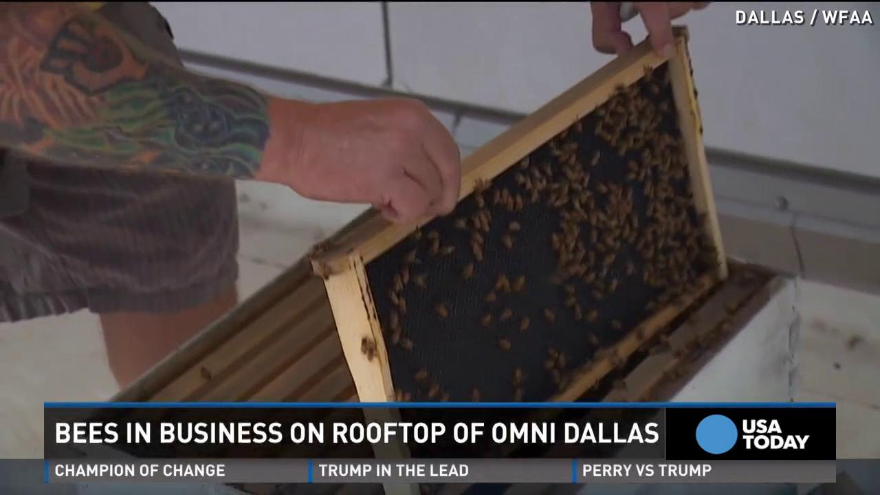 300,000 bees 'check in' permanently to hotel rooftop