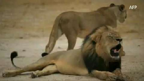 Yelpers bare teeth at dentist, alleged lion killer