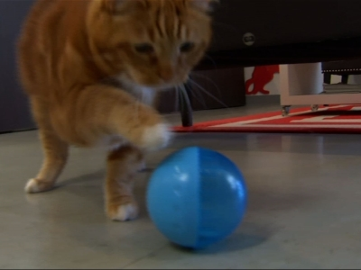 Texas vet adopts formerly fat cat