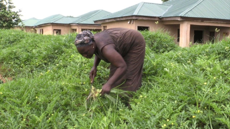 Nigeria's women farmers call for land rights