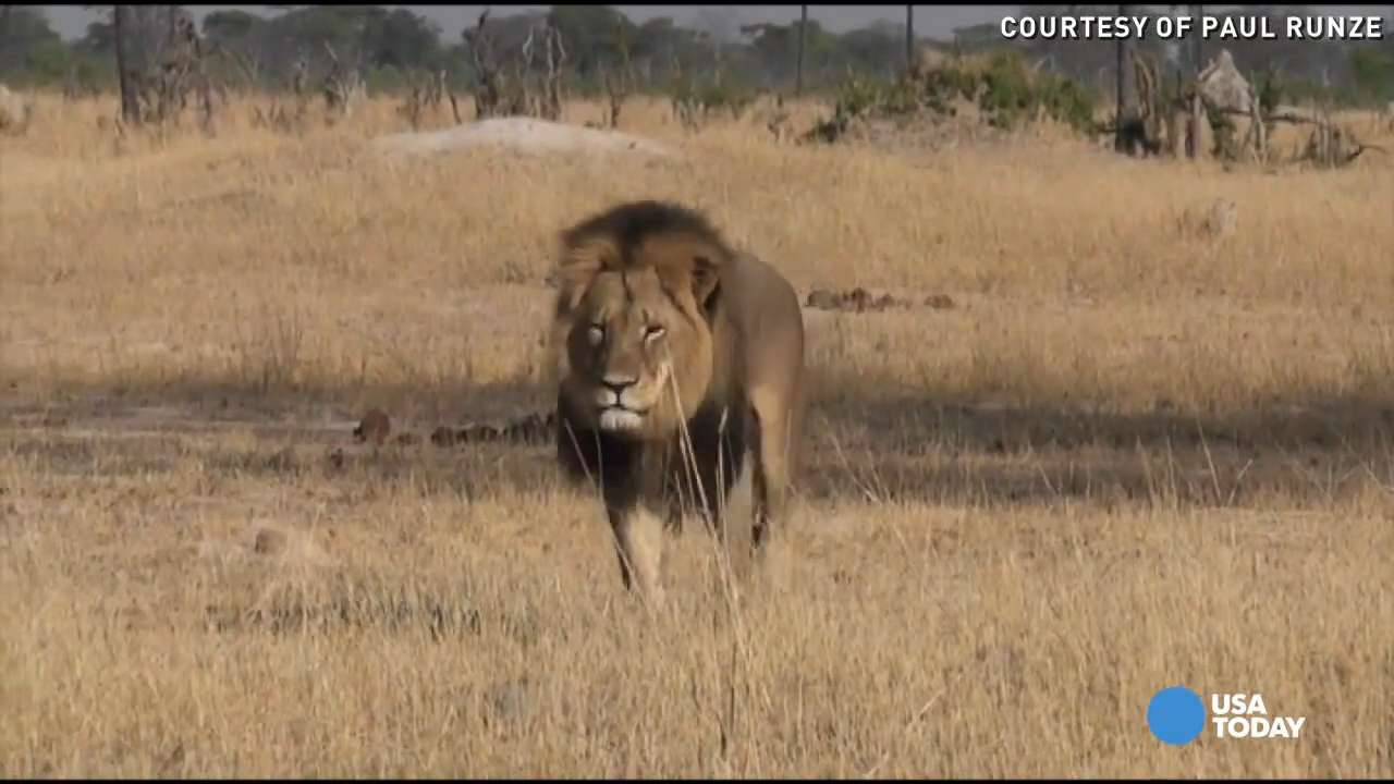 Feds investigating the killing of Cecil the lion