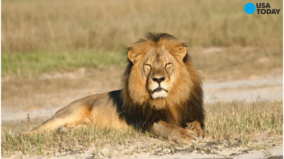 Was Cecil the lion's brother, Jericho, also killed?