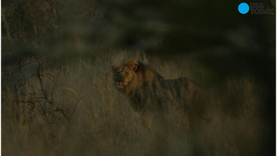 Authorities: Jericho the lion is alive and well