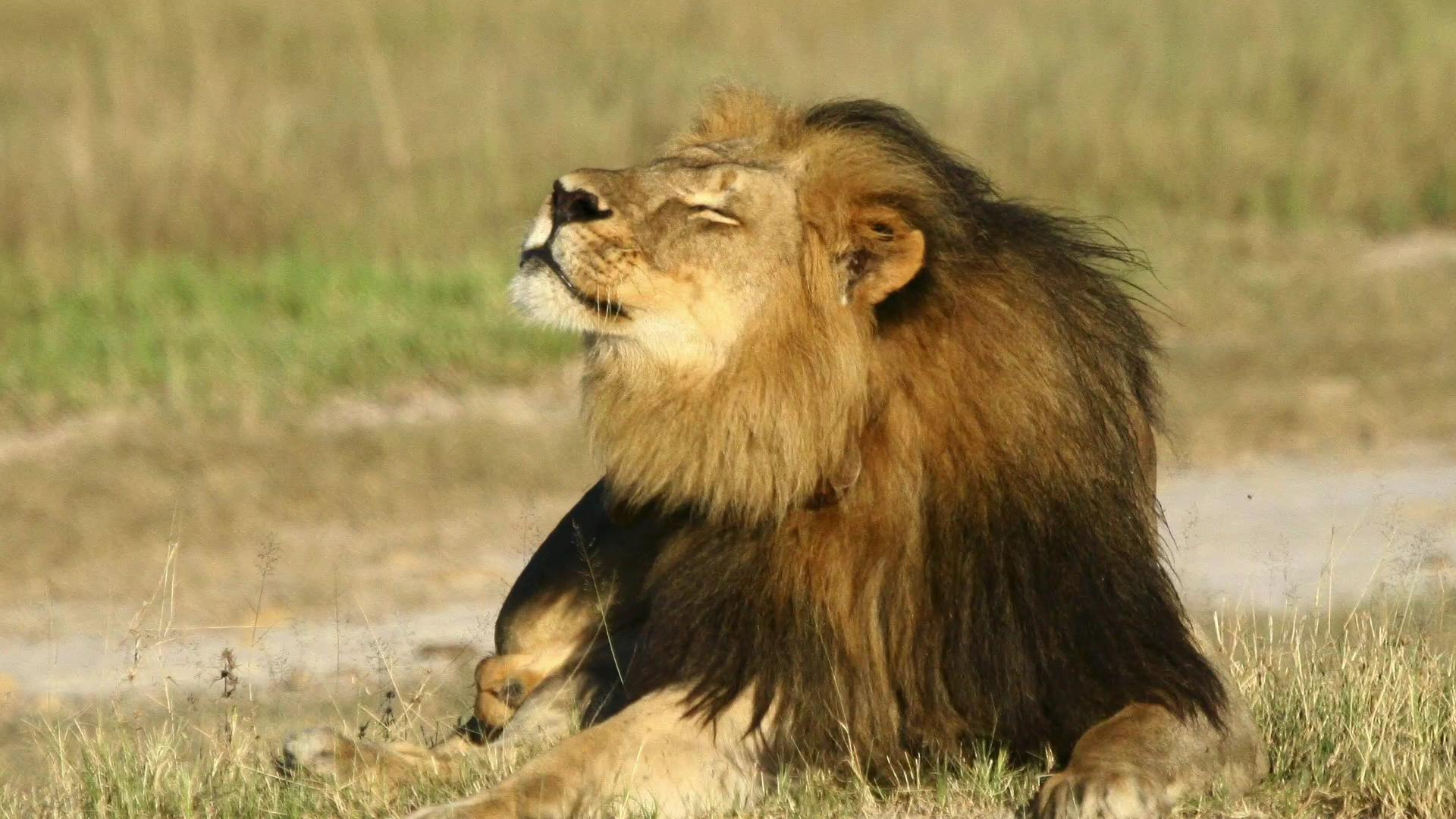 Delta, American and United ban big-game 'trophies'