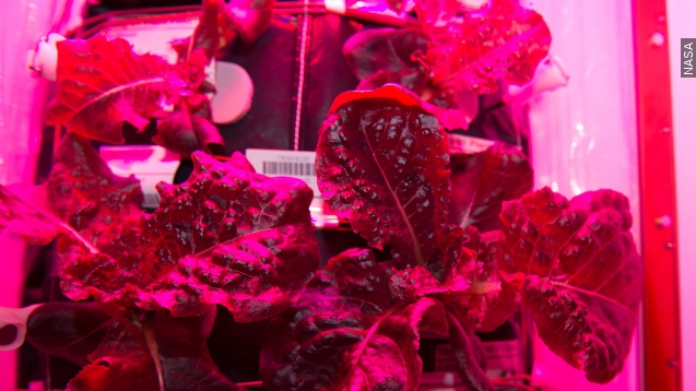 Purple lettuce? Sure if it's grown by NASA in outer space