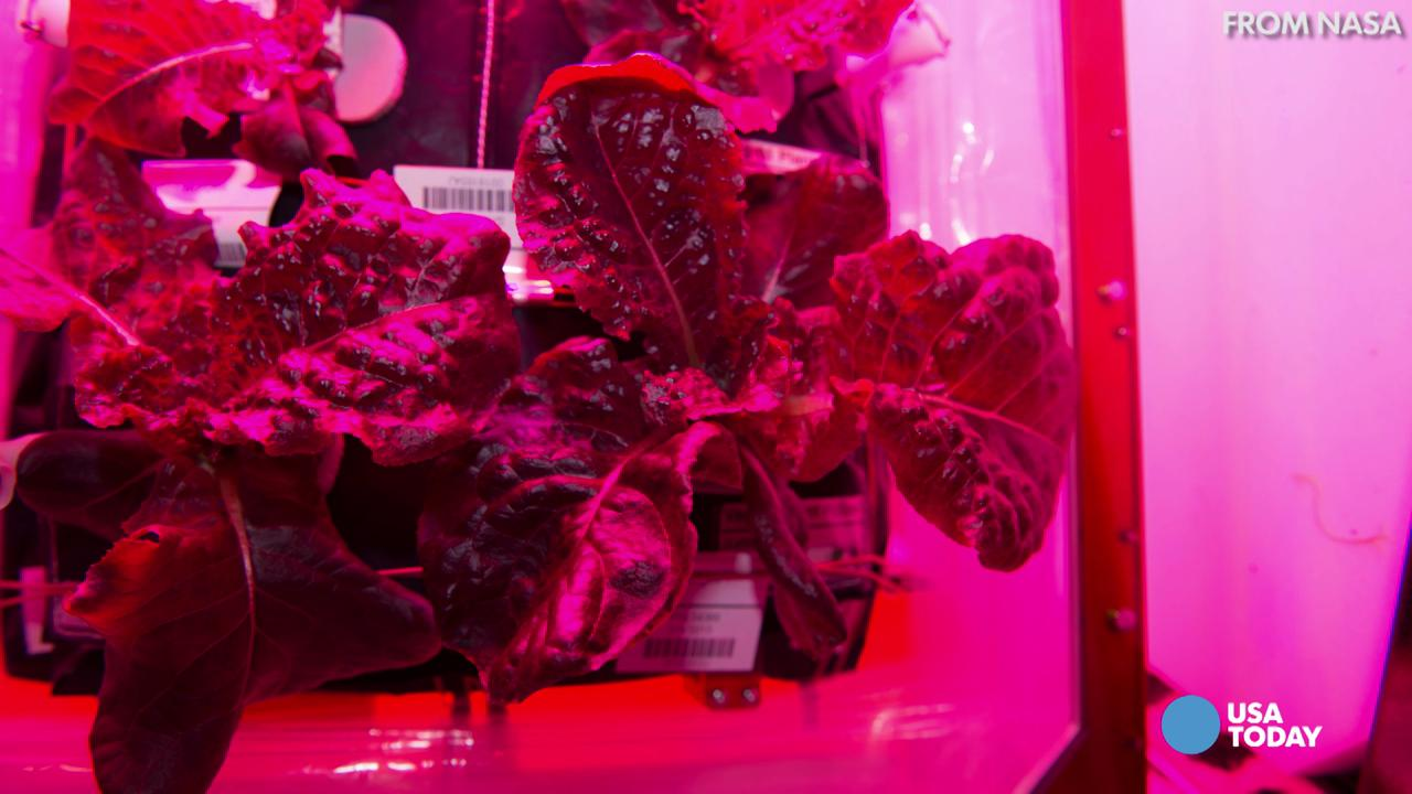 Astronauts will eat salad grown on the ISS 73