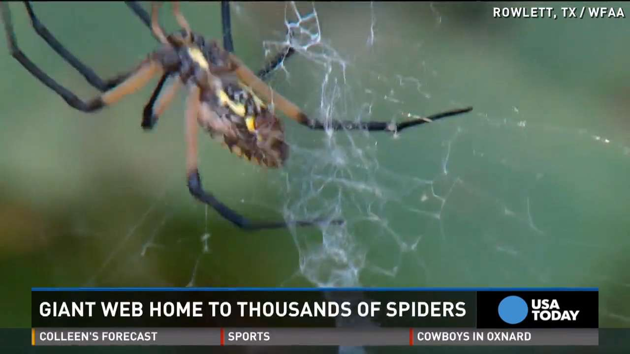 'Army of spiders' invades park, creates super web