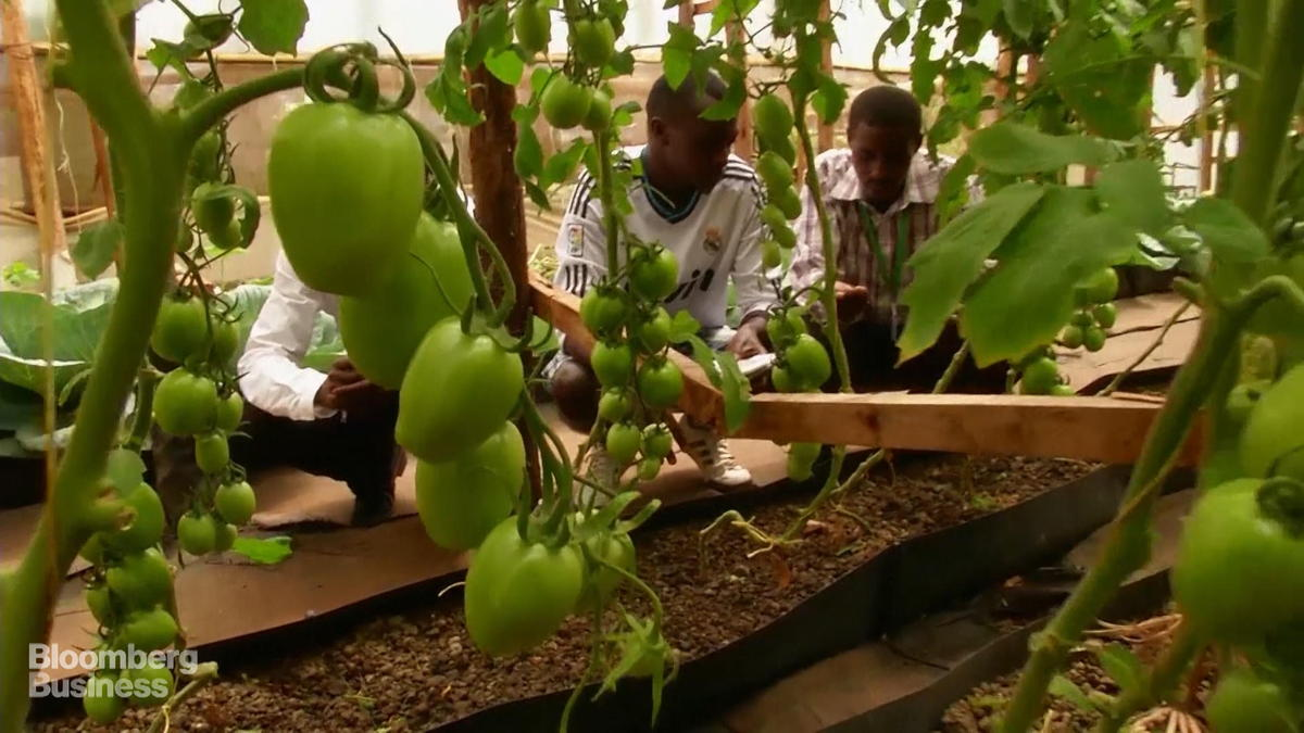 How Hydroponics Could Revolutionize Farming in Africa