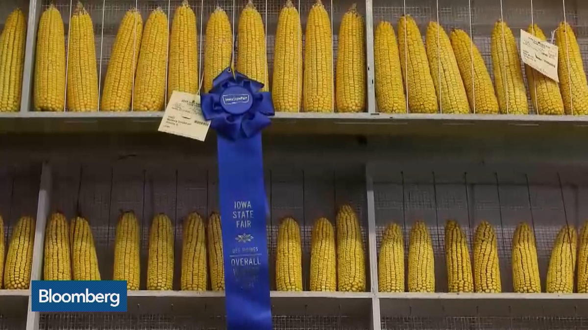 Iowa State Fair: Presidential Politics on a Stick