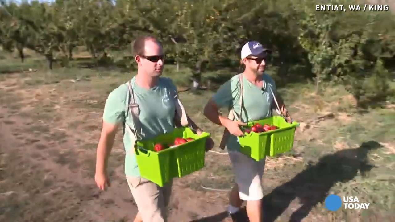 Millennial brothers use modern way to boost farm sales