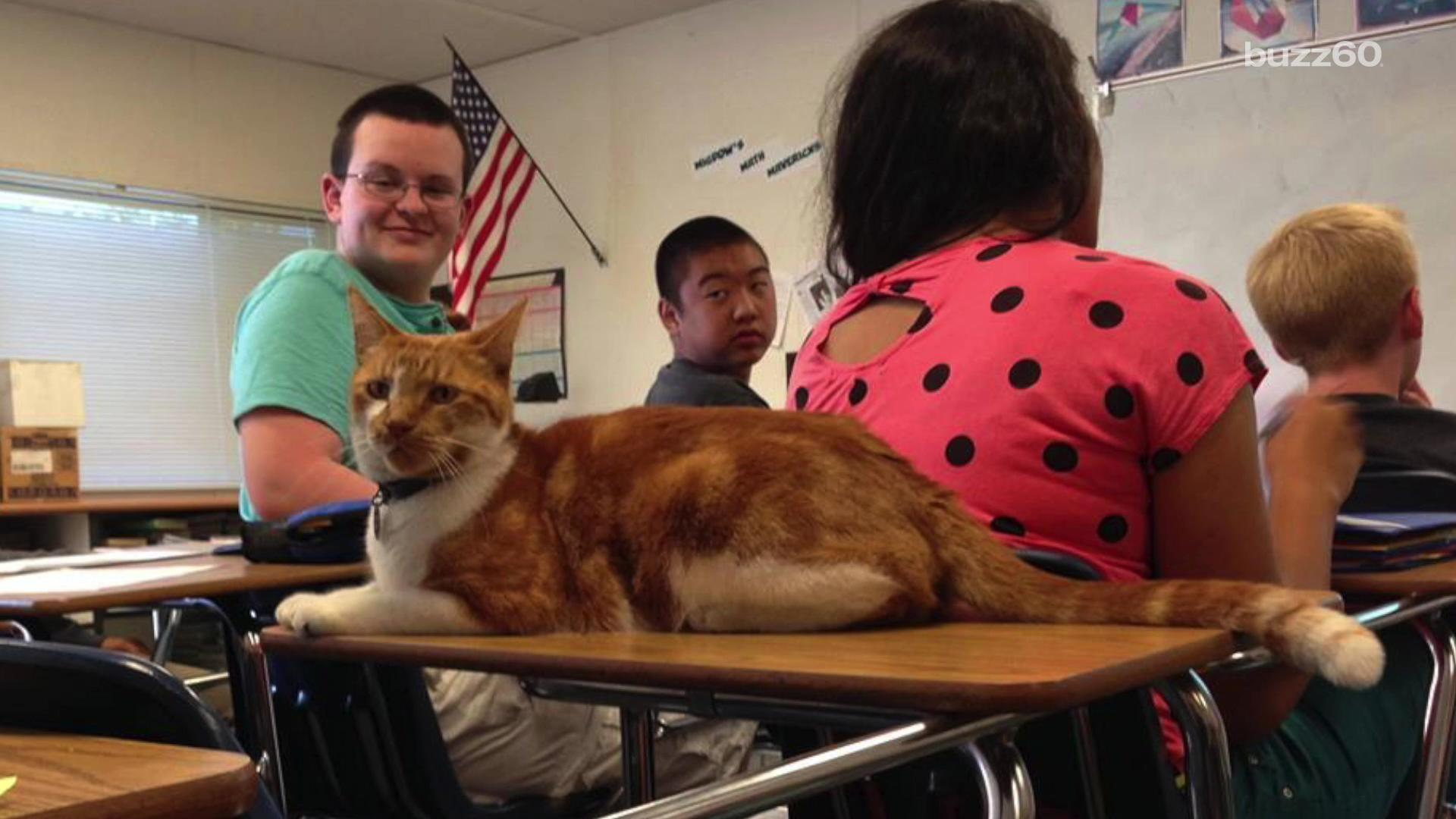 A cat named Bubba attends class so much at Leland High School in San Joes, CA that he was issued an official student ID card.