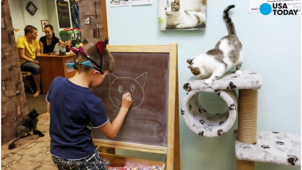 Check out New York City's first cat cafe!