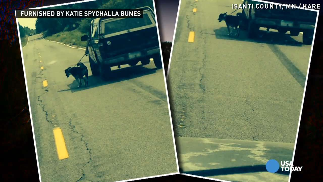 Man caught 'walking' dog from truck at 30 mph