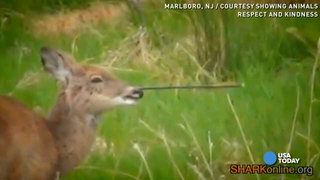Deer with arrow in face prompts public outcry