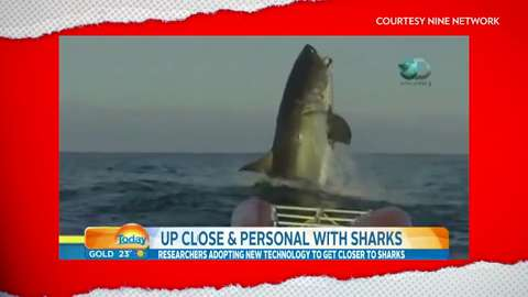 Giant shark video leaves newscaster speechless