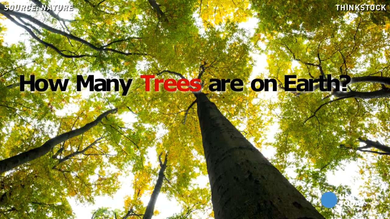 Can you believe it? Earth has 3 trillion trees!