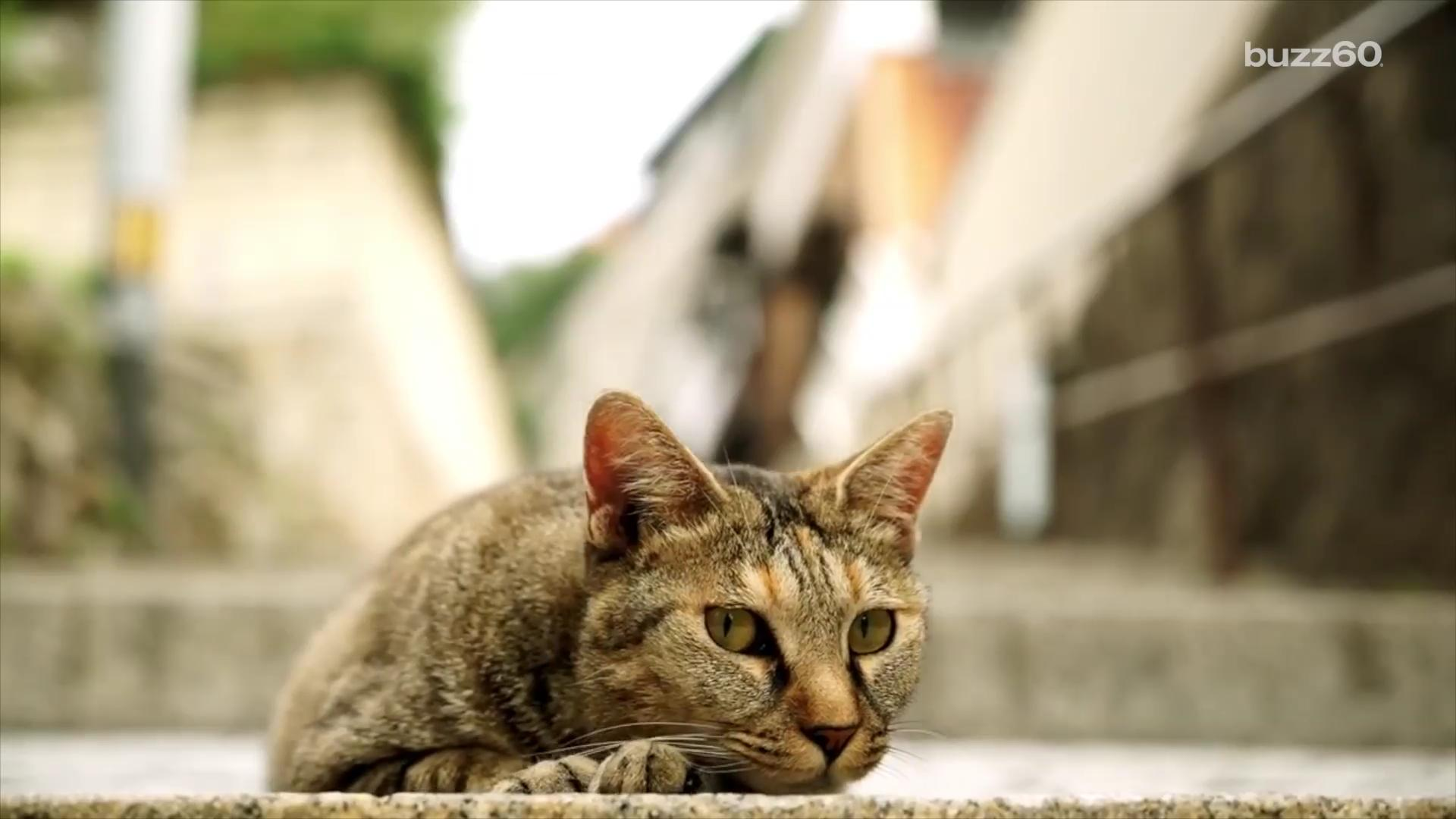 A prefecture in Japan created the world's first ever 'cat street view,' a Google-street-view-type interactive map entirely from a cat's perspective. Jen Markham (@jenmarkham) has the story.