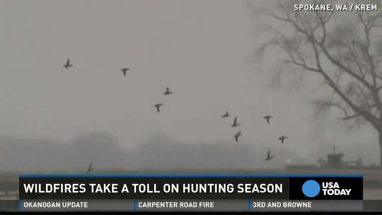 Wildfires take toll on hunting season