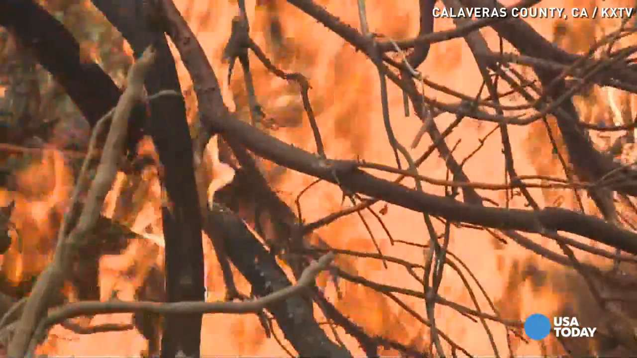 Man fleeing Northern California wildfire: 'The road was on fire'