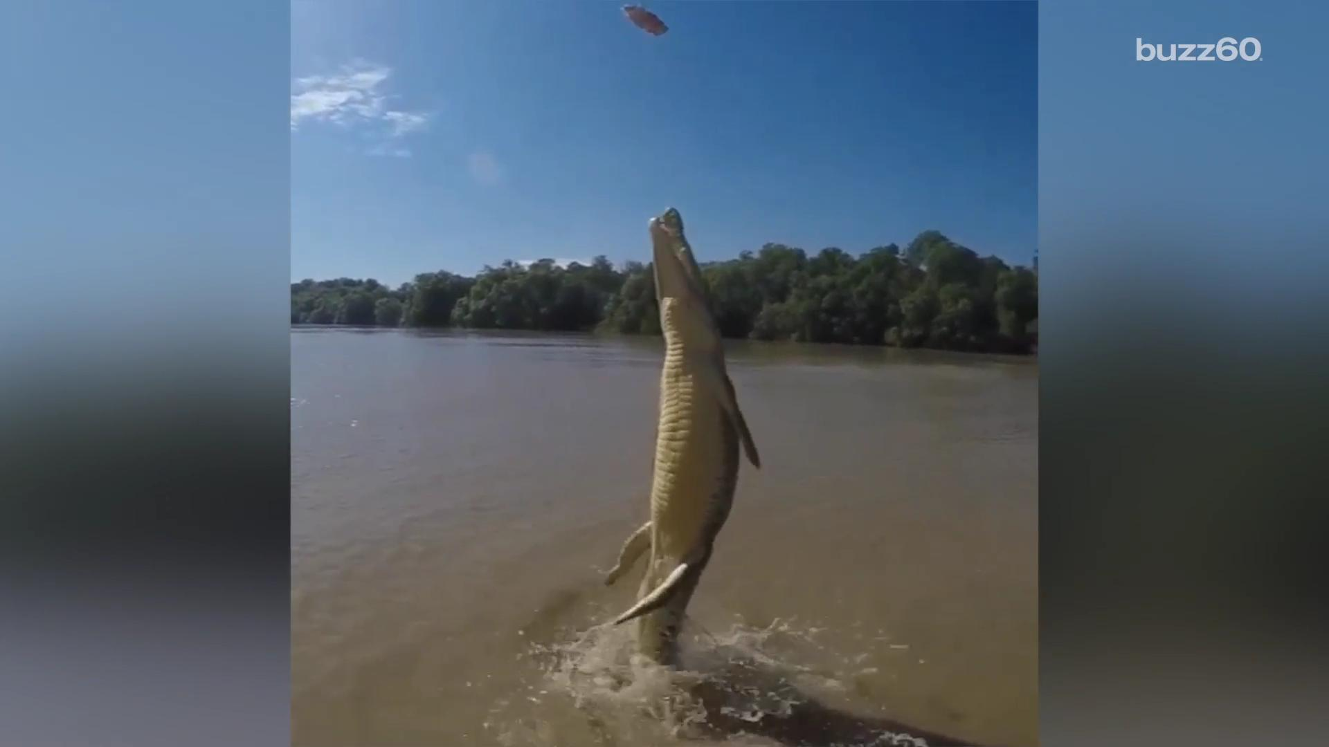 Watching this croc launch itself out of the water will give you serious nightmares
