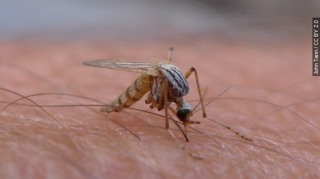 As if global warming weren't bad enough, it helps mosquitoes